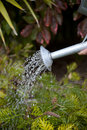 Watering Plants Stock Images - 20231634
