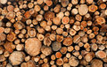 Stacked Cut Raw Timber Wood Logs Stock Images - 20238944