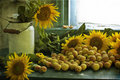 Sunflowers And Apricots Royalty Free Stock Photos - 20274598