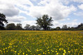 English Spring Meadow Stock Photography - 20295192