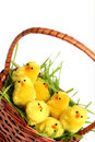 Easter Chicken Royalty Free Stock Photos - 2032678