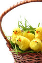 Easter Chicken Royalty Free Stock Photo - 2032695