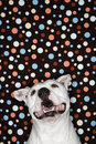 White Dog Against Polka Dot Background. Royalty Free Stock Images - 2037919