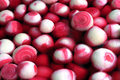 Pickled Onions Royalty Free Stock Image - 20300726