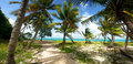Blowing Beach Palms Stock Images - 20309484