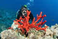 Man Scuba Diver And Red Coral Stock Photography - 20349292