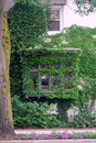 Ivy Vine Windows And Wall Stock Images - 20353964