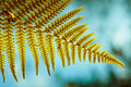 Fern Leaf Showing Spores Royalty Free Stock Image - 20385076
