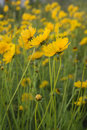 Yellow Flowers Stock Images - 2045984