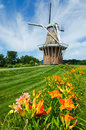 Summer Flowers With Duch Windmill On Background Royalty Free Stock Photo - 20438475