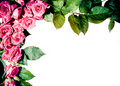 Roses Frame Stock Photography - 20443602