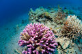 Corals In The Sea Royalty Free Stock Images - 20458619