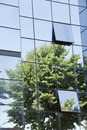 Tree Reflection In The Glass Palace Stock Photography - 20461012