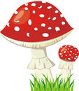 Two Fly Agaric Royalty Free Stock Images - 20473089
