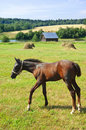 Foal Royalty Free Stock Photography - 20474397