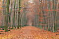 Pathway In The Autumn Forest Royalty Free Stock Images - 20509199