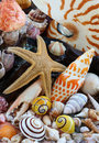 Sea Shells, Sea Star On Beach Stock Image - 20517001
