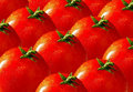 Tomatoes Royalty Free Stock Photo - 20521255