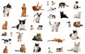 Cats In Studio Royalty Free Stock Photo - 20547485