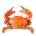 Crab Stock Photos - 20559193