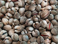 A Background Of Fresh Cockles For Sale At A Market Stock Images - 20616224