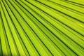 Palm Leaf Background Stock Photos - 20654843