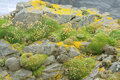 Moss Covered Rocks Stock Photos - 20656023