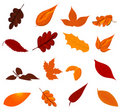 Autumn Leaves Stock Images - 20690044