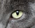 Cat Eye Royalty Free Stock Image - 20694716