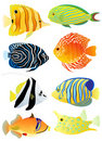 Collection Of Tropical Fish Royalty Free Stock Photography - 20715937