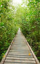 Wooden Walkway In Mangrove Forest Stock Photo - 20721230