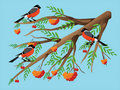 Bullfinches On A Mountain Ash. Royalty Free Stock Photography - 20738887