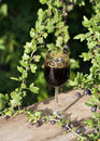Gooseberry Wine Royalty Free Stock Images - 20753389
