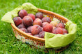 Greengage Plums Royalty Free Stock Photography - 20760977