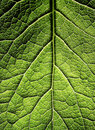 Leaf Royalty Free Stock Images - 20793489
