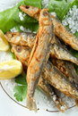 Oven Sprats Royalty Free Stock Images - 2080069
