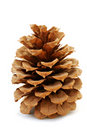 Pinecone Stock Images - 2080854