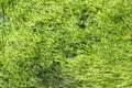 Green Seaweed Growth Royalty Free Stock Photos - 20810058