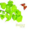 Nature Concept - Butterfly And Green Leaves Stock Photos - 20812453