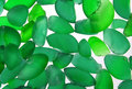 Green Glass Pieces Royalty Free Stock Images - 20849679