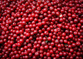 Cranberries Royalty Free Stock Photography - 20852777