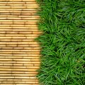 Green Grass On Bamboo Royalty Free Stock Photo - 20868975