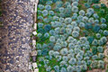 Cobbled Road And Green Plants Royalty Free Stock Photos - 20907688