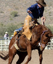 Rodeo Bucking Bronc Rider Stock Photography - 20951082