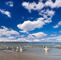 Sea Gull On The Sea, Blue Cloudy Sky. Royalty Free Stock Images - 20951379