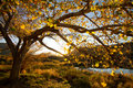 Autumn Sunset Royalty Free Stock Images - 21028069