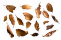Dried Leaves Stock Image - 21031351