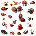 Collection Of Seven-spot Ladybirds Stock Image - 21062481