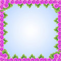 Purple Pink Roses Frame Royalty Free Stock Photography - 21114747