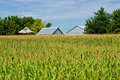 Corn Field, And Barns Stock Image - 21123131